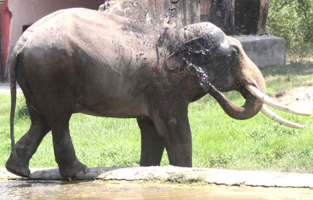 New Delhi: An elephant seen inside its enclosure at the National Zoological Park in New Delhi, on June 1, 2019. (Photo: IANS)