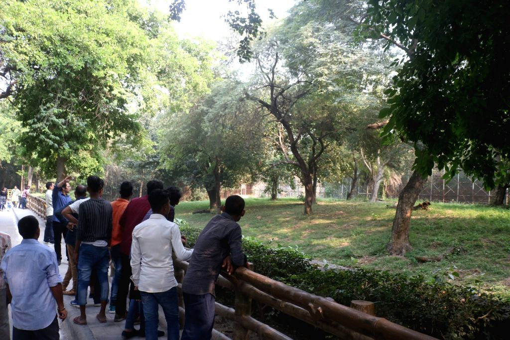 New Delhi: People gather outside the enclosure of a lion after a man jumped inside, at the National Zoological Park in New Delhi on Oct 17, 2019. According to senior police officer, the man is 'mentally disturbed' and belongs to Seelampur in north-ea