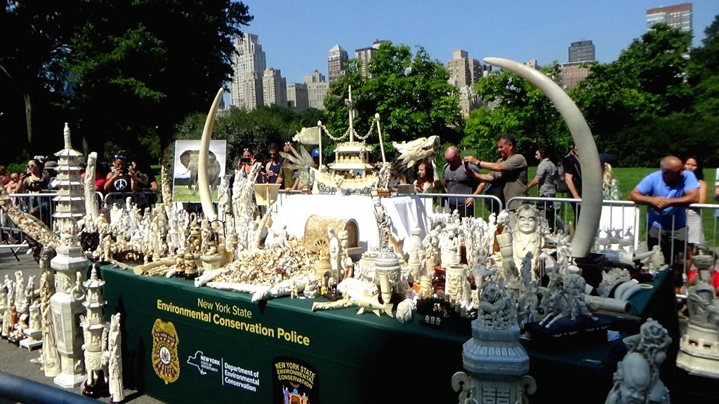 NEW YORK, Aug. 3, 2017 - The ivory artifacts which are going to be destroyed in the Ivory Crush event are displayed at Central Park in New York, the United States, on Aug. 3, 2017. Nearly two tons of ...