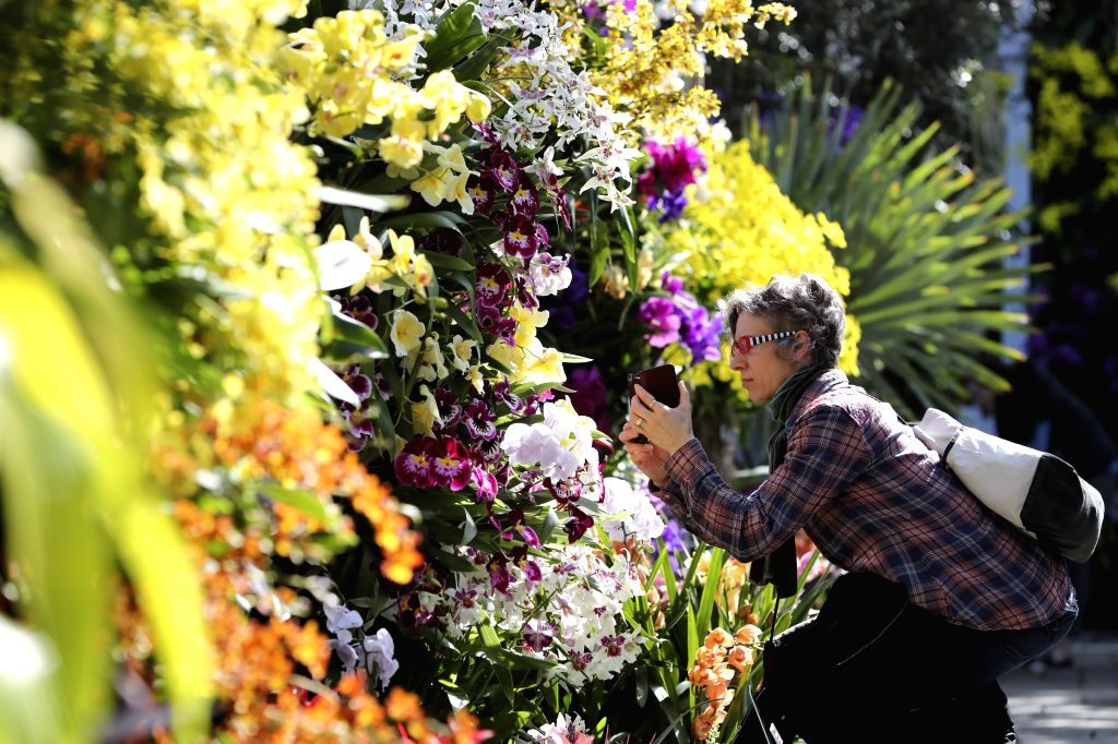 NEW YORK, Feb. 28, 2017 - A visitor takes photographs of orchids at the Orchid Show in New York, the United States, on Feb. 28, 2017. The Orchid Show celebrates its 15th year at the New York ...