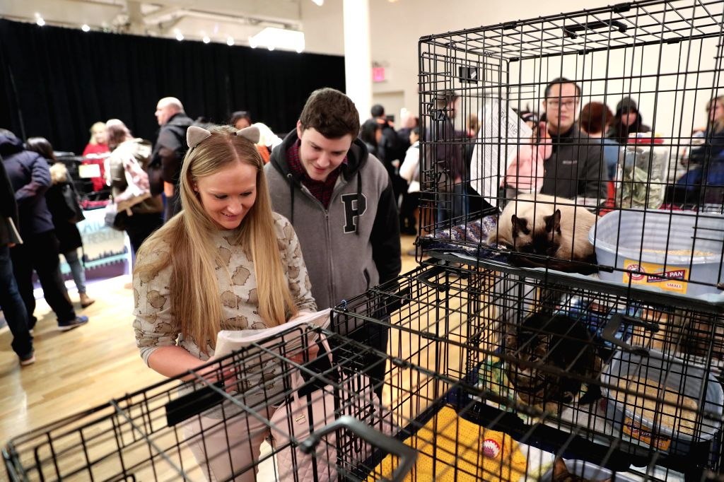 New York, March 11, 2017 - Visitors read introductions of adoptable cats during the Cat Camp in New York, the United States, on March 11, 2017. The two-day Cat Camp, the city's first feline-focused ...