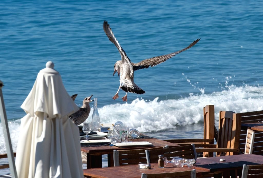 NICE, July 16, 2016 - Seagulls look for food left by guests in haste on Thursday evening at a restaurant in Nice, France, July 16, 2016. The Islamic State (IS)-linked news agency Amaq claimed ...