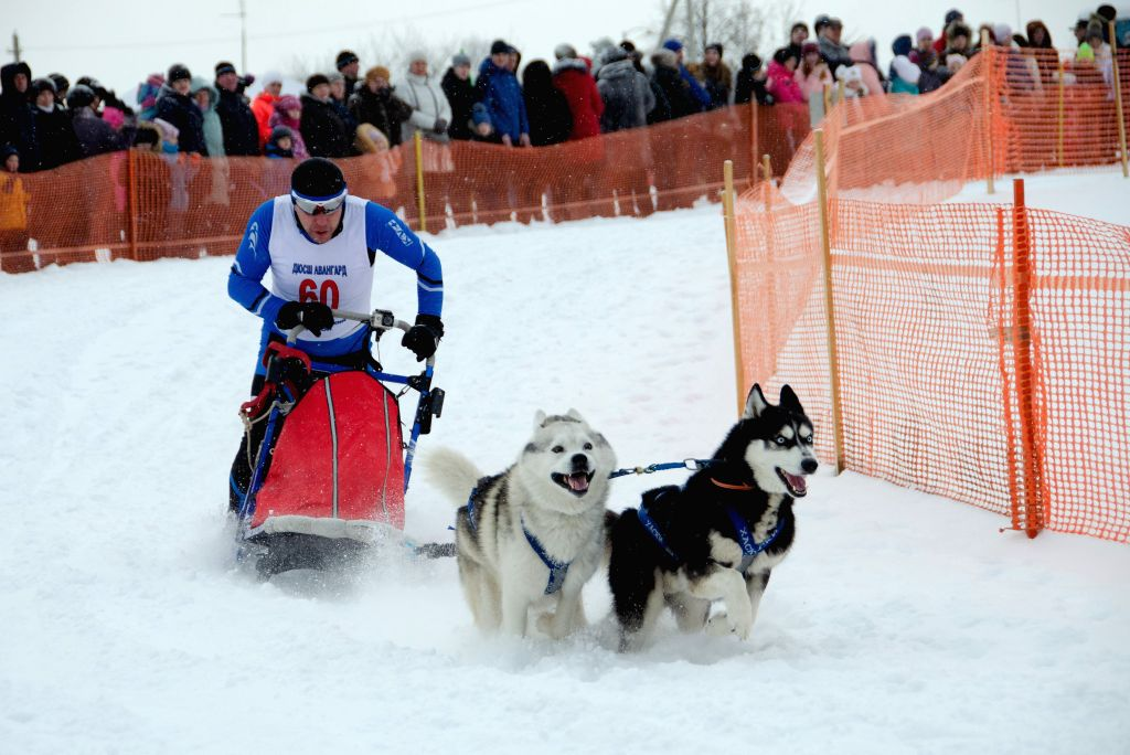 NIZHNY NOVGOROD, Feb. 3, 2019 - A participant competes during a dog sledding race in Nizhny Novgorod, Russia, Feb. 2, 2019. A dog sledding race was held in Nizhny Novgorod. 125 teams from across the ...