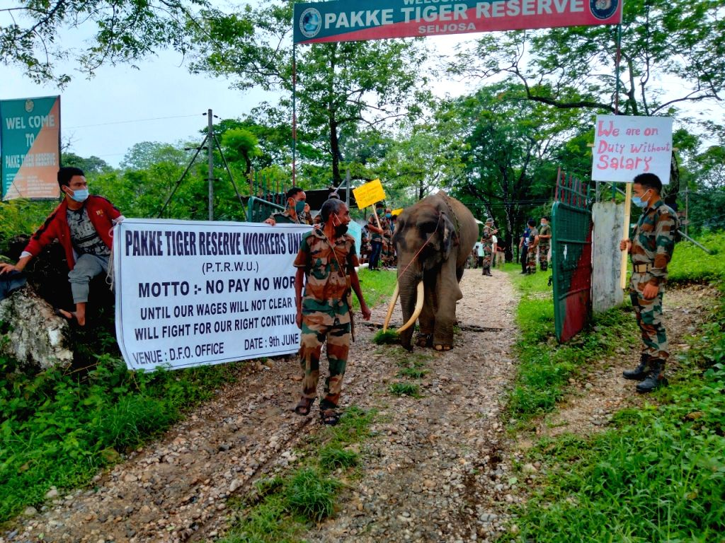 No pay for 6 months, workers in indefinite stir : Arunachal tiger reserve unguarded
