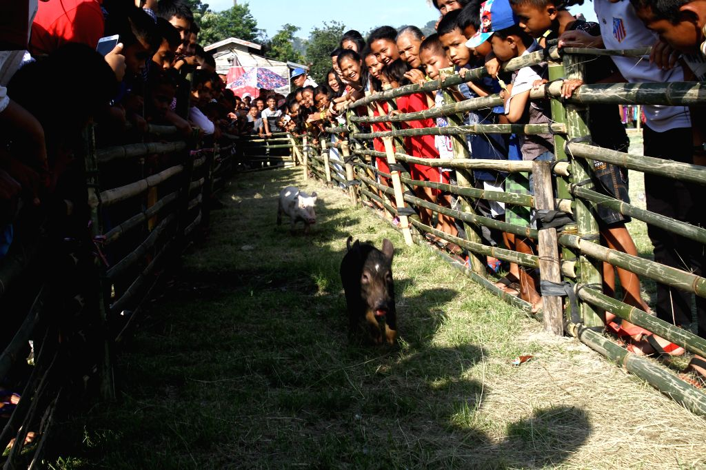 NORTH SUMATRA (INDONESIA), Oct. 25, 2019 People watch pig race during the Lake Toba Festival in Tapanuli Utara region, North Sumatra, Indonesia, Oct. 25, 2019.