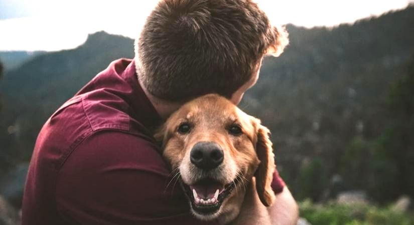 Now, ayurvedic care for your pets