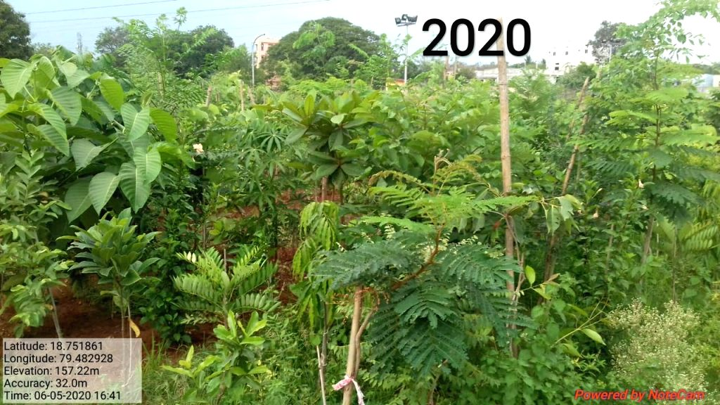 NTPC-Ramagundam showing new way of urban foresting