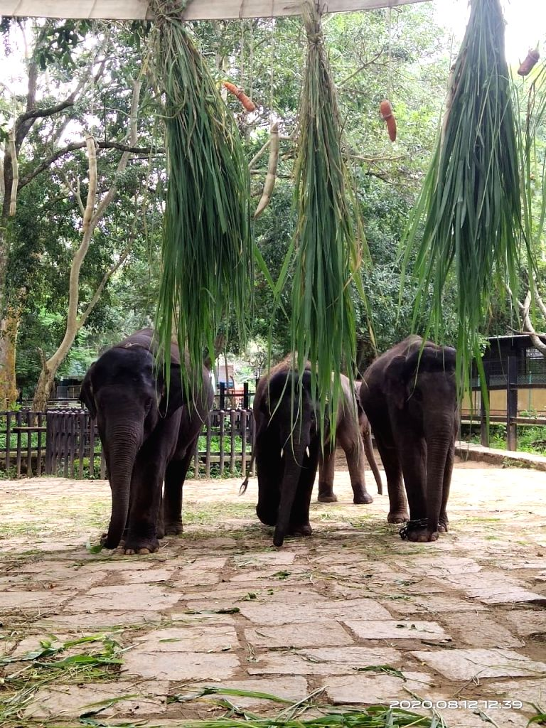 On World Elephant Day, B'luru Zoo accepts mahouts' contribution.