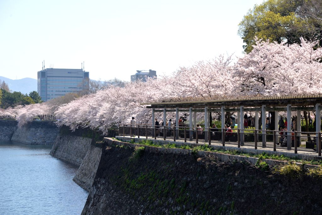 Tourists appreciate cherry blossoms at a park in Osaka, Japan, April 2, 2015.