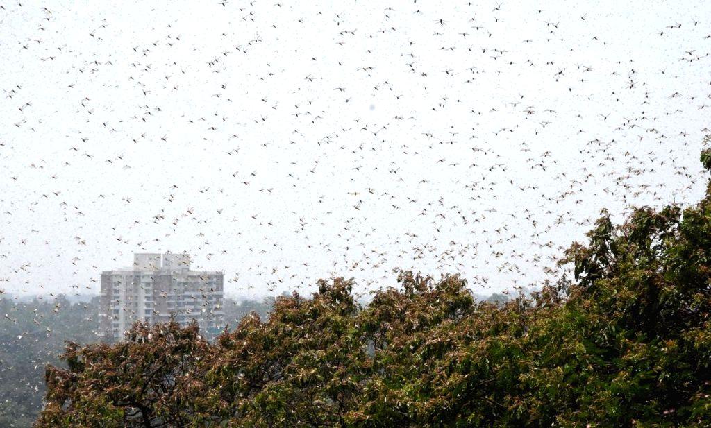 Pakistan allocates fund to fight locust attack