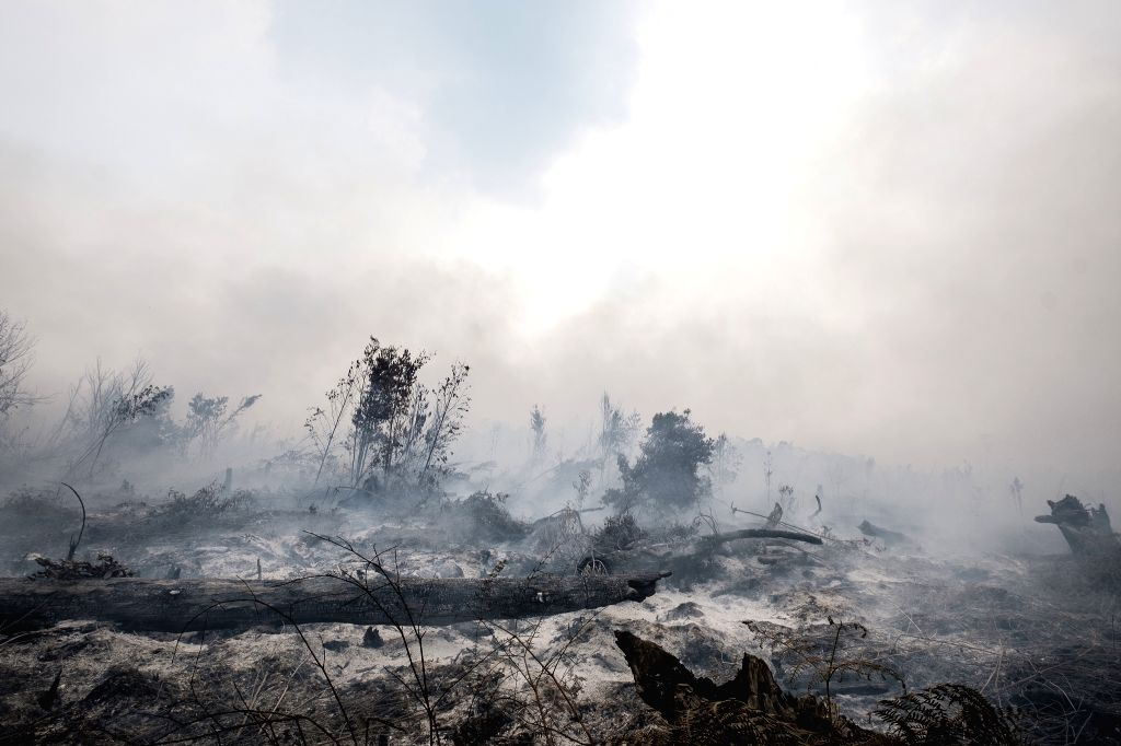 PALANGKARAYA, Sept. 28, 2019 - Smoke of a forest fire is seen at Sebangau National Park in Palangkaraya, Central Kalimantan, Indonesia, Sept. 28, 2019.
