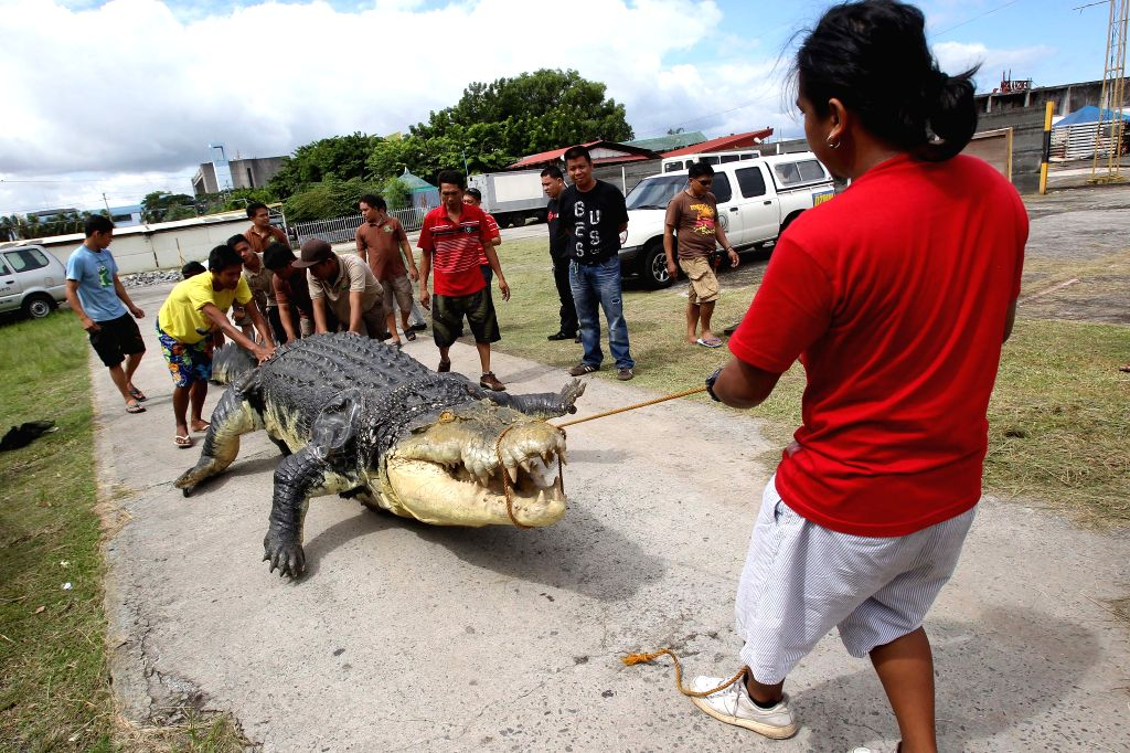 "Workers pull ""Longlong"", a 21-foot robot crocodile from a truck at the Crocodile Park in Pasay City, the Philippines, July 5, 2014. The robot crocodile,"