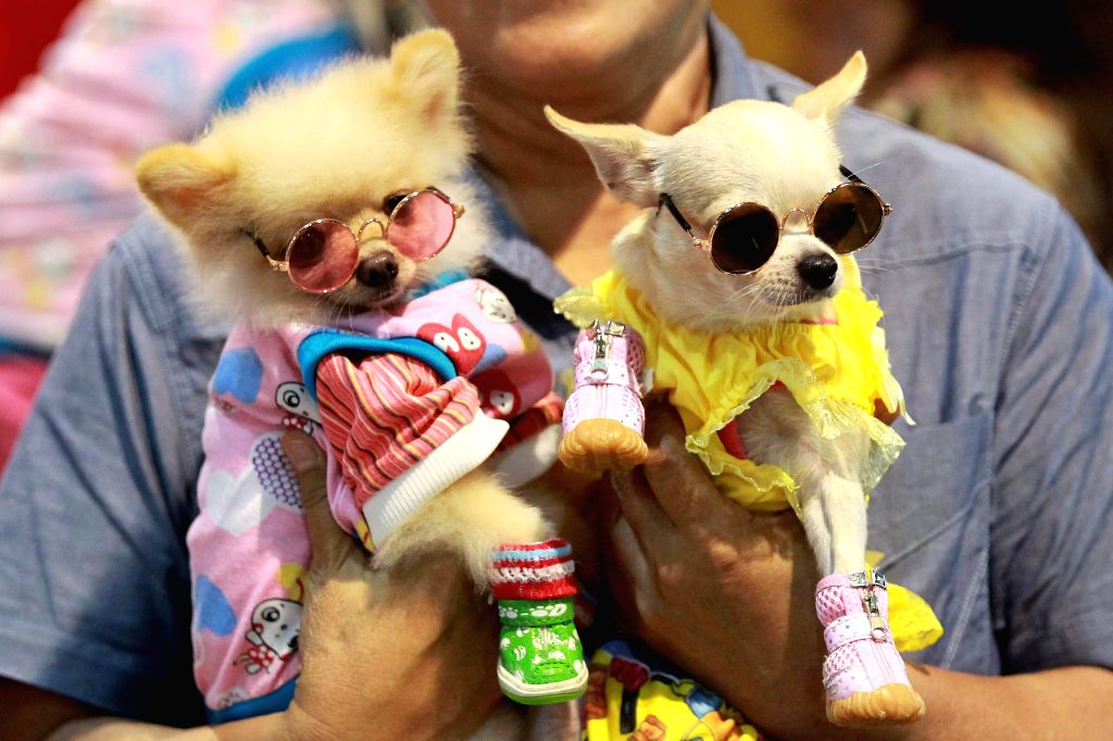 PASAY, July 20, 2019 - Pet dogs wearing costumes are seen during the annual Dog and Cat Expo in Pasay City, the Philippines, July 20, 2019.