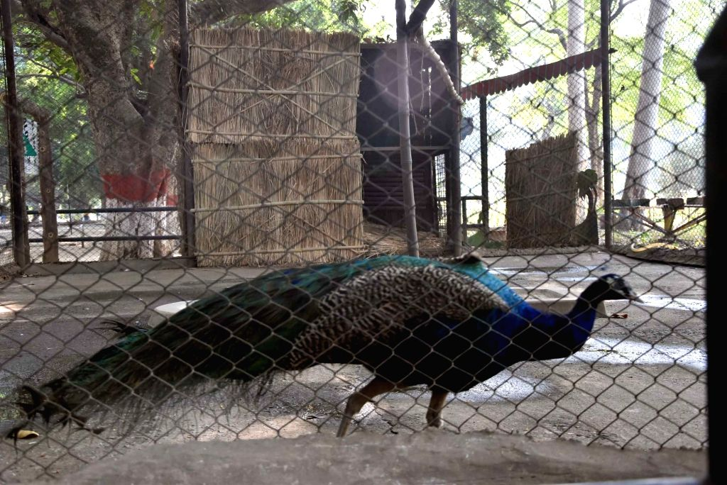 Patna Zoo closed after 6 peacocks die
