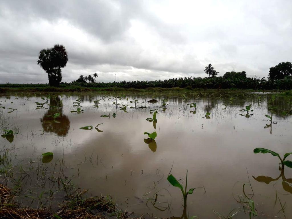 Penumaka: Rains lash Penumaka village near Amaravati as cyclonic storm 'Phethai' crossed Andhra Pradesh coast, on Dec 17, 2018. (Photo: IANS)