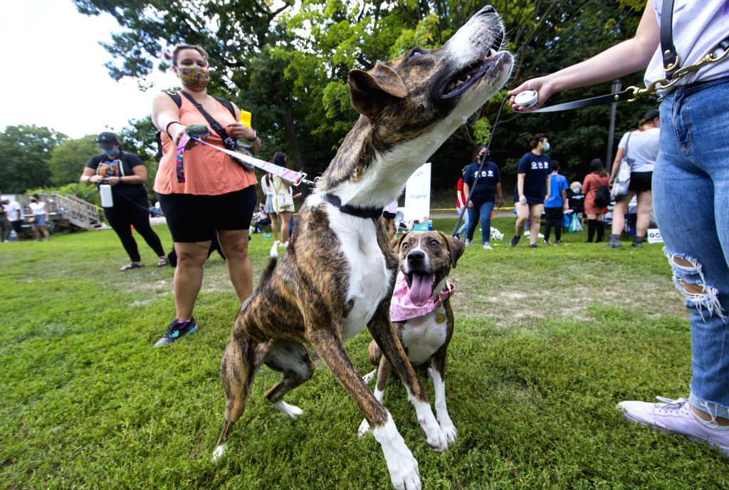 People and their pet dogs take part in the 2020 Party 4 Paws event in a park in Toronto, Canada, on Aug. 30, 2020. As a family-friendly event, the pet fair drew ...