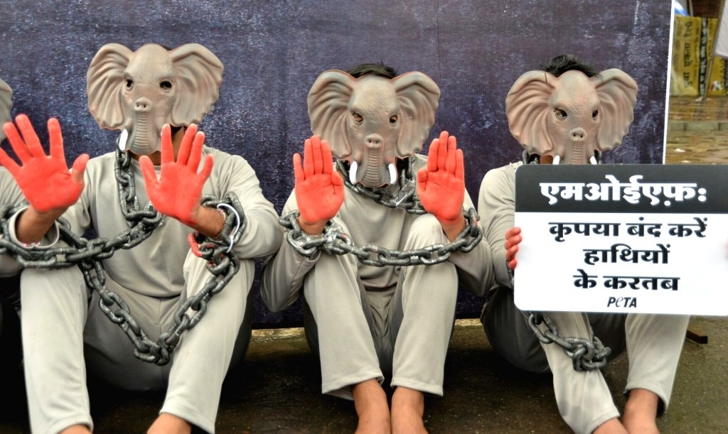 People for the Ethical Treatment of Animals (PETA) ​activists dress up as elephants ahead of World Elephant Day in New Delhi on Aug 9, 2017.