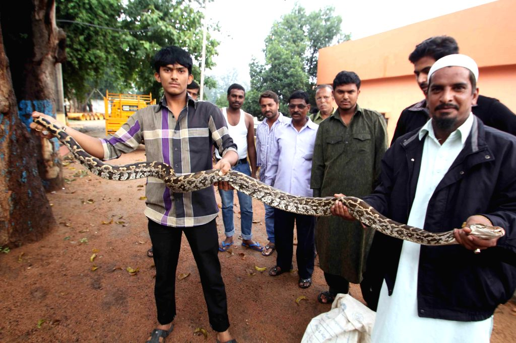 People show a 10-feet long Python which tried to swallow a goat in Hyderabad on Aug 29, 2014.