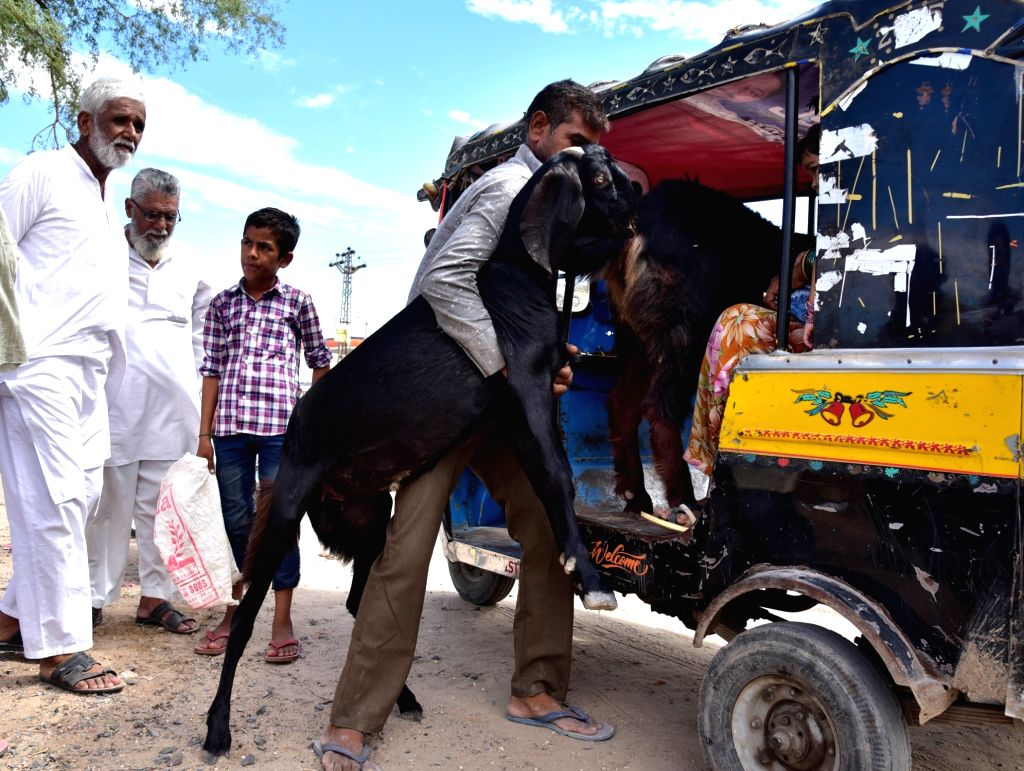 People take home sacrificial goats after buying them from a livestock market ahead of Eid-Ul-Zuha celebrations, in Bikaner on Aug 9, 2019.