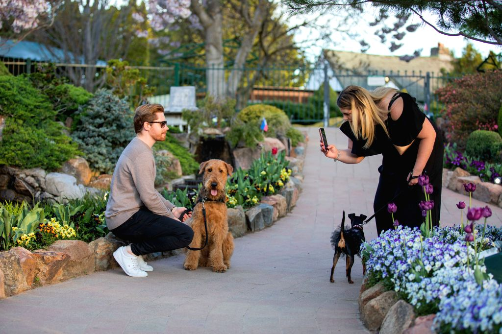 """People take photos with their pet dogs during an annual flower festival Floriade in Canberra, Australia, Oct. 11, 2020. TO GO WITH """"Feature: Celebration of ..."""