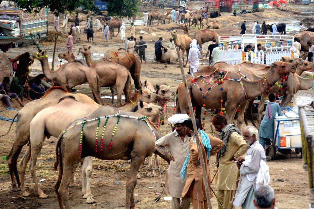 People visit a cattle market ahead of Eid al-Adha festival in Lahore, Pakistan, July 30, 2020.