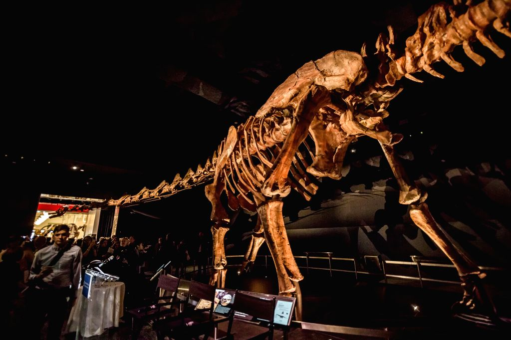 "People visit the ""Titanosaur"" skeleton exibition in the American Museum of Natural History in New York, the United States, Jan. 14, 2016. Starting from ..."