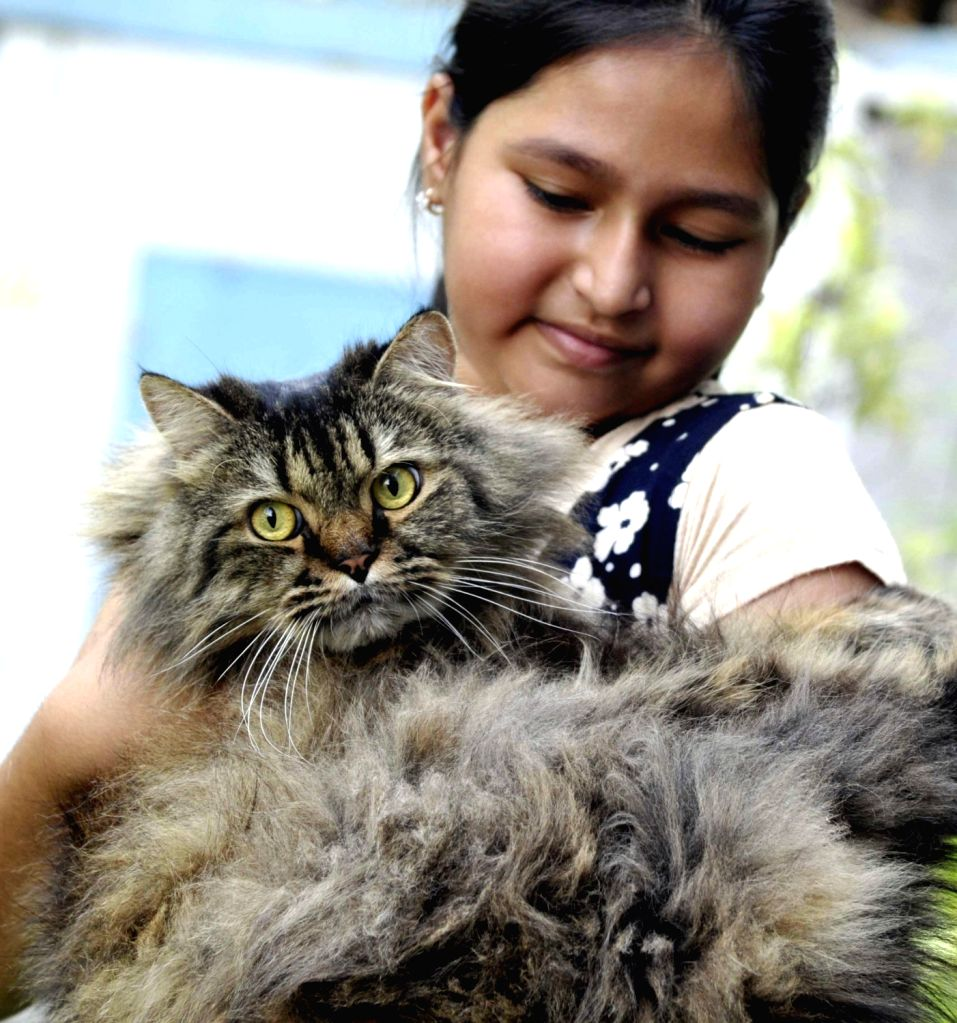 People with their pets during 6th International Cat Show in Bengaluru, on April 17, 2016.