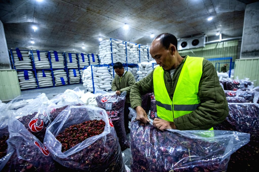People work at a refrigeration storehouse in Xinpu New District of Zunyi, southwest China's Guizhou Province, Aug. 13, 2020. Xinpu New District of Zunyi has developed ...