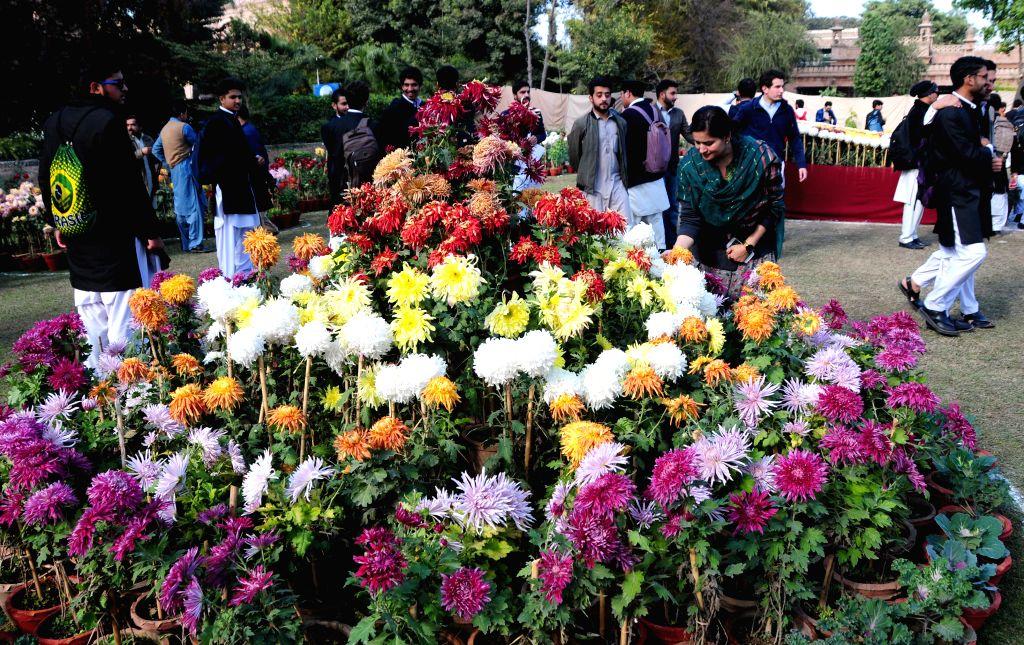 PESHAWAR, Dec. 11, 2019 - People visit a chrysanthemum flower show in northwest Pakistan's Peshawar on Dec. 11, 2019.