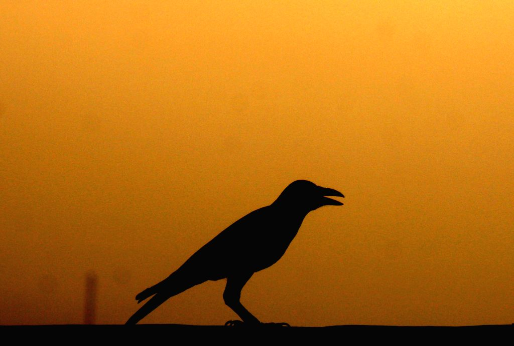 PESHAWAR, Oct. 7, 2019 - Photo taken on Oct. 7, 2019 shows a crow silhouette during sunset in northwest Pakistan's Peshawar.