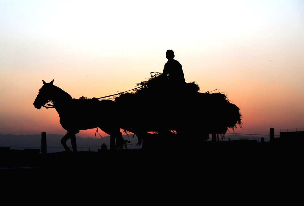Peshawar (PAKISTAN), June 25, 2020 A worker on a horse cart is silhouetted against sunset in Peshawar, northwest Pakistan, on June 25, 2020.