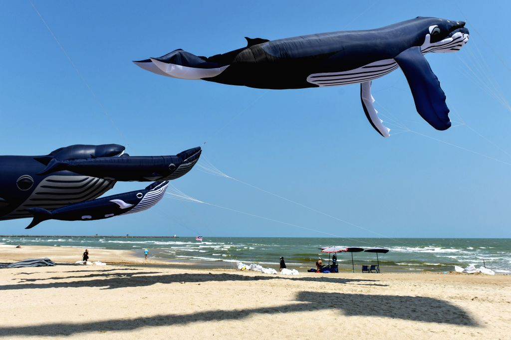 PHETCHABURI (THAILAND), March 10, 2017 Whale-shaped show kites hover above the Cha-Am Beach during the Thailand International Kite Festival 2017 in central Thailand's Phetchaburi ...