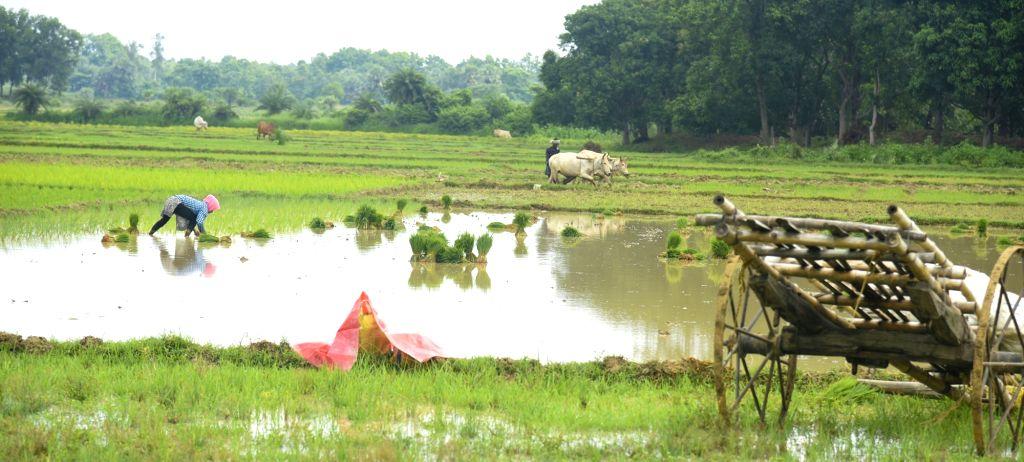(Photo: Indrajit Roy/IANS) - Indrajit Roy