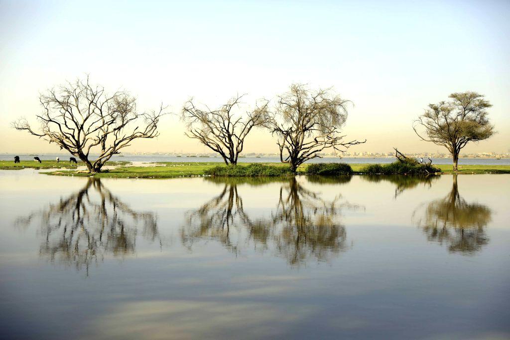 Photo taken on Feb. 6, 2020 shows the scenery of al-Sunut Forest on the bank of the White Nile in Khartoum, Sudan.