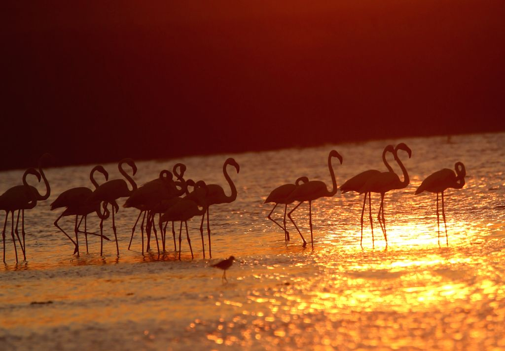 Photo taken on July 9, 2020 shows flamingoes at Lake Mogan in Ankara, Turkey.