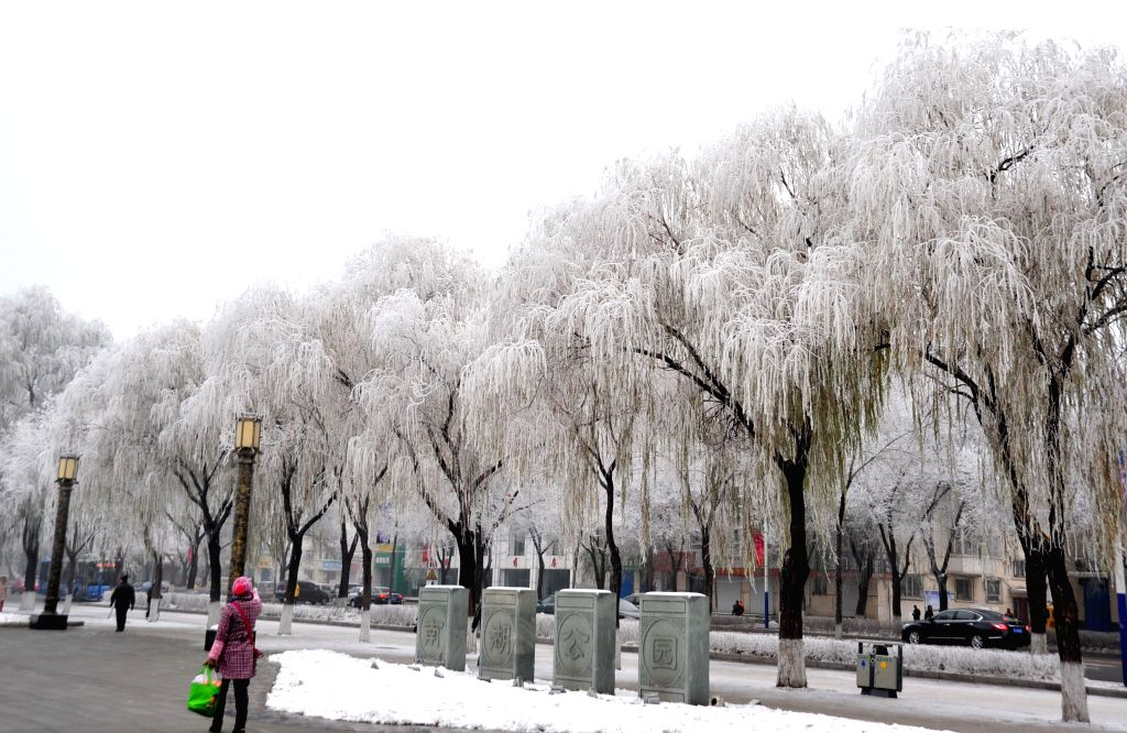 Photo taken on Nov. 13, 2015 shows the rime scenery in Mudanjiang, northeast China's Heilongjiang Province.