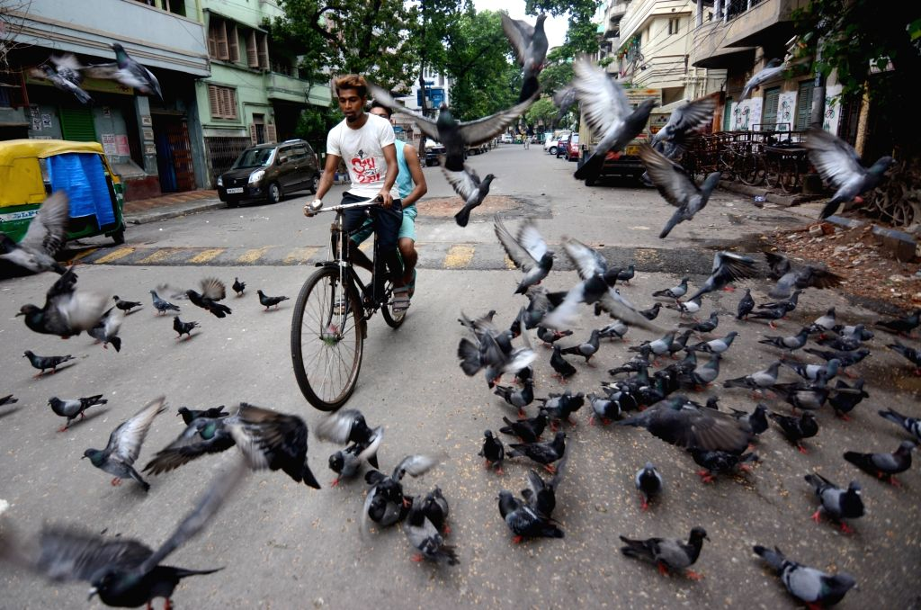 Pigeons are playing the deserted road during the lockdown on Coronavirus pandemic in Kolkata on Sunday, June 20, 2021.