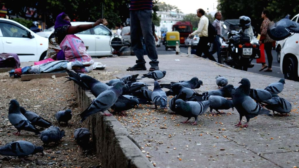 Pigeons at Connaught Place in New Delhi on Oct 20, 2016.