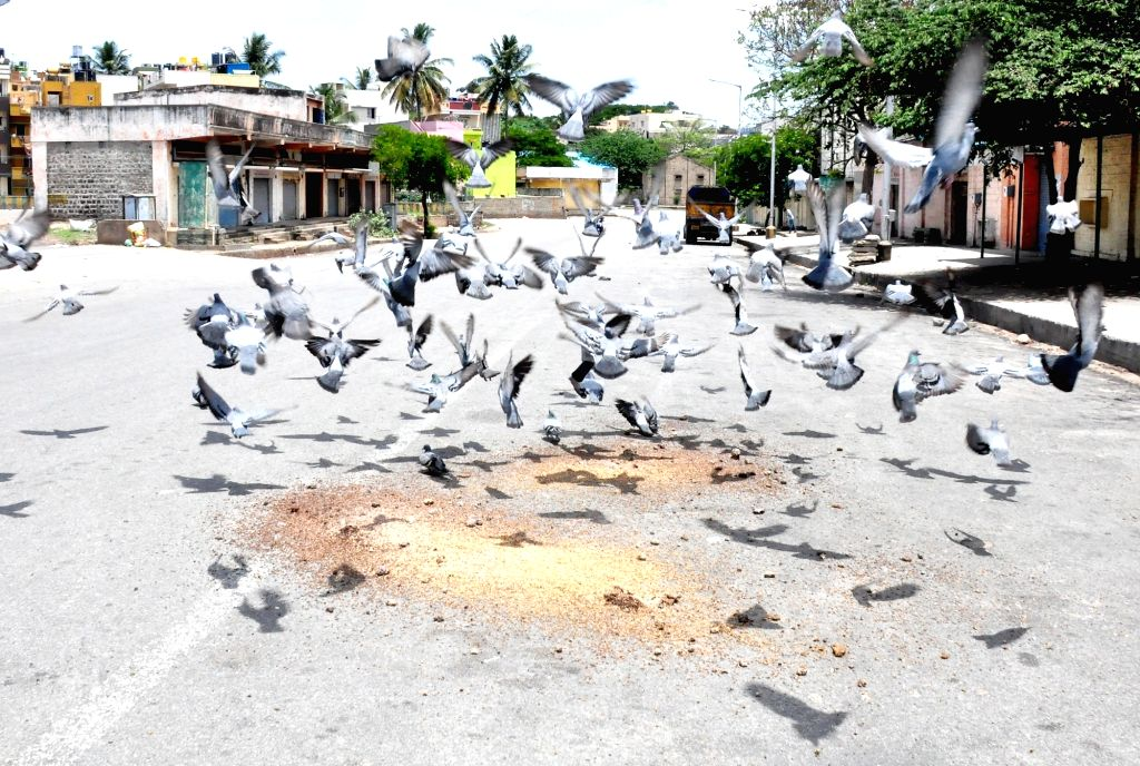 Pigeons  in front of closed shops at APMC Yard, Yeshwanthapura  during lockdown in the wake of the 2nd wave of COVID-19, in Bengaluru on Friday 14 May 2021.