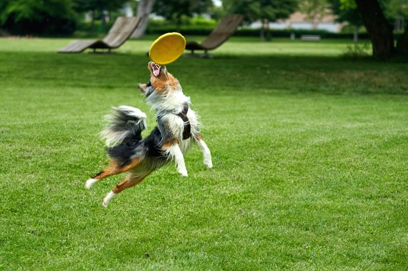Play ideas to keep your pet active and alert.