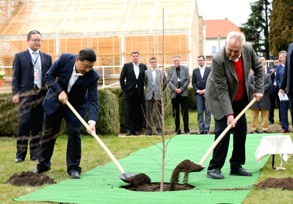 PRAGUE, March 28, 2016 - Chinese President Xi Jinping (L front) and Czech President Milos Zeman (R front) plant a a ginkgo biloba tree sapling from China before their meeting at the Lany presidential ...