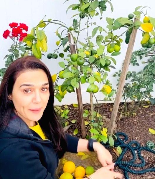 Preity Zinta is back to 'ghar ki kheti'. - Preity Zinta
