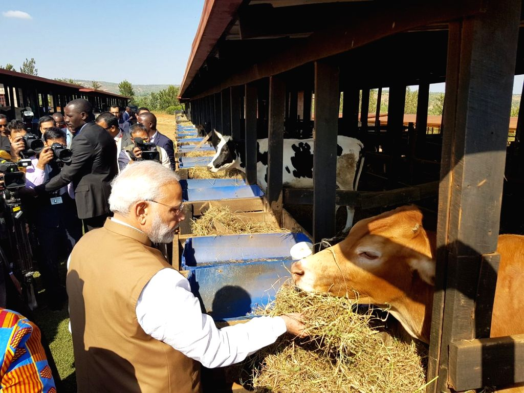 Prime Minister Narendra Modi along with Rwanda President Paul Kagame during a programme where he donated 200 cows under Girinka - One Cow per Poor Family Programme at Rweru village in Rwanda's ... - Narendra Modi