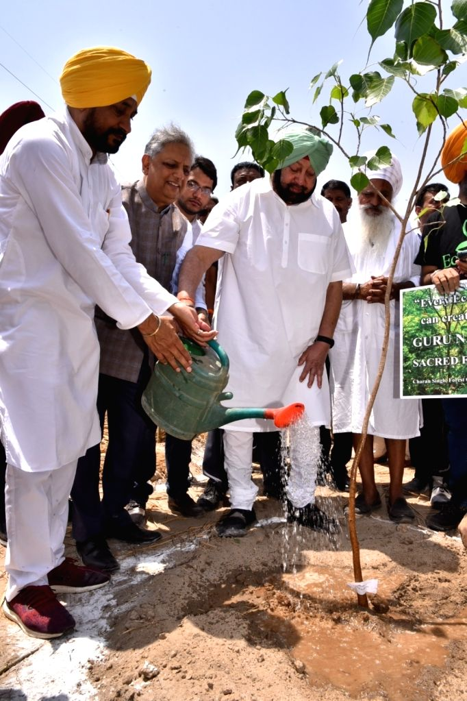 Punjab Chief Minister Captain Amarinder Singh waters a plant on World Environment Day, in Amritsar, on June 5, 2019. - Captain Amarinder Singh
