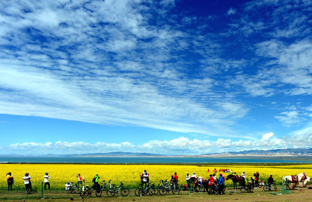 Cyclists rest by a field of rape flowers along the Qinghai Lake, northwest China's Qinghai Province, July 23, 2014.