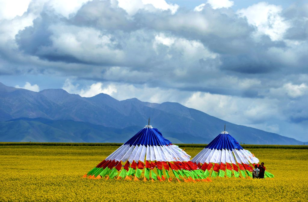 Photo taken on July 23, 2014 shows prayer flags in a field of rape flowers by the Qinghai Lake, northwest China's Qinghai Province.