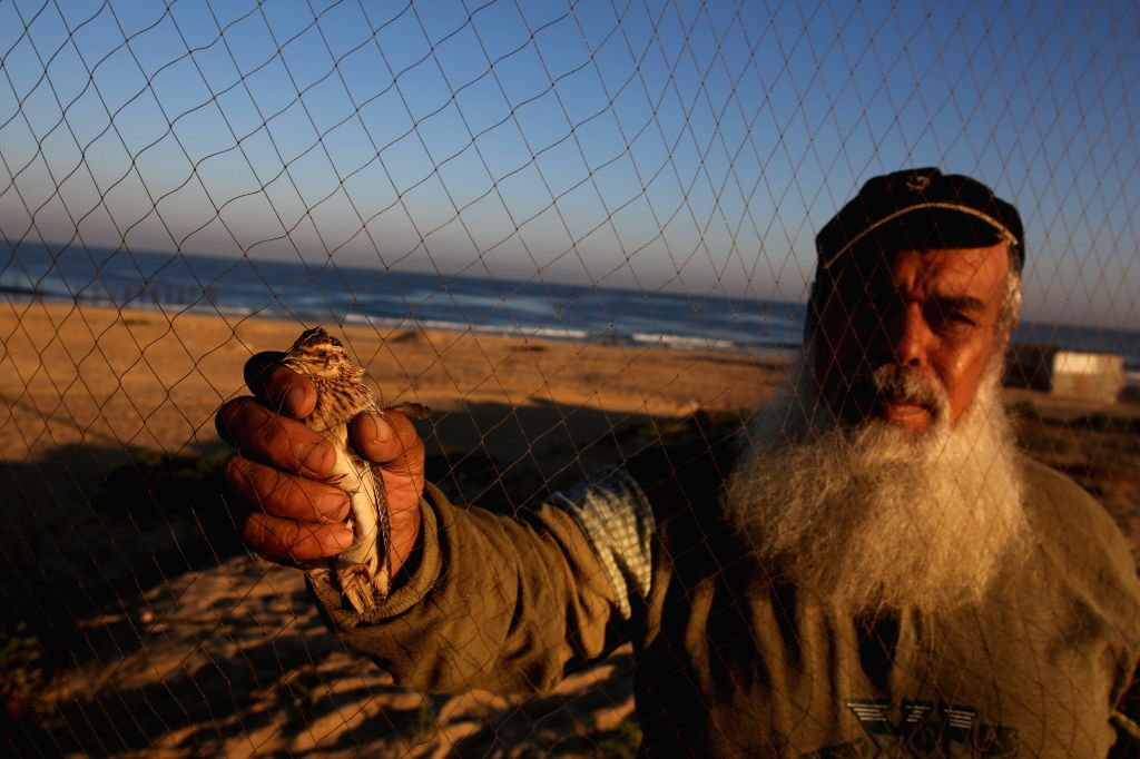RAFAH, Sept. 20, 2016 - A Palestinian removes a migrant quail snared in a net on the beach in southern Gaza Strip city of Rafah, on Sept. 19, 2016.