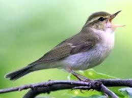 Rare bird spotted in Gorakhpur