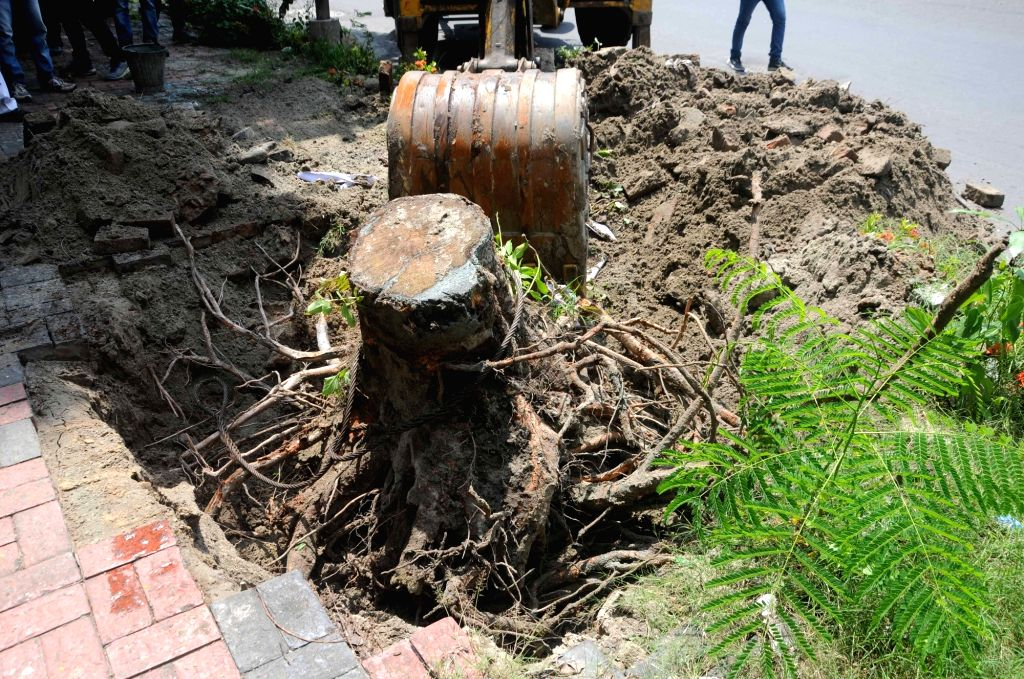 "Re-plantation of trees that were uprooted in cyclone ""Amphan"" at Salt Lake in Kolkata on Aug 29, 2020."