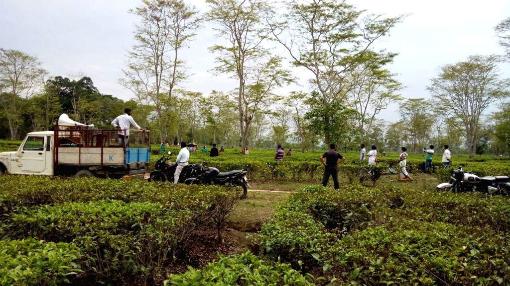 Record rise of covid cases in Assam's tea estates.